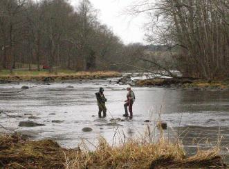 Trout Fishing Trips - South Fork Holston River, TN